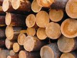 Продам лес круглый (кругляк) дуба и акации.