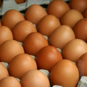 Продам яйцо инкубационное, а также суточный молодняк.