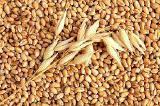 Пшеница Закупаем Краснодарский край