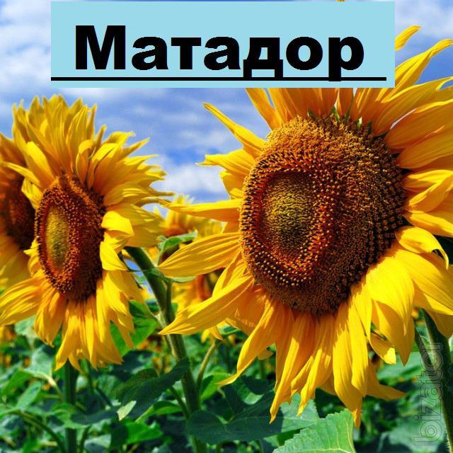 Гібрид соняшнику Матадор
