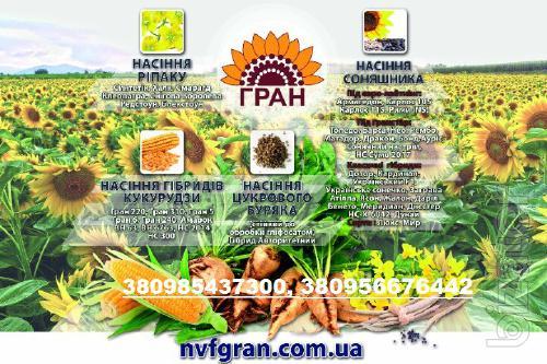 Науково-виробниче підприємство «ГРАН» реалізує високоякісне насіння гібридів технічних культур.