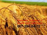 Закупка зерновых и масличных культур в Запорожской области