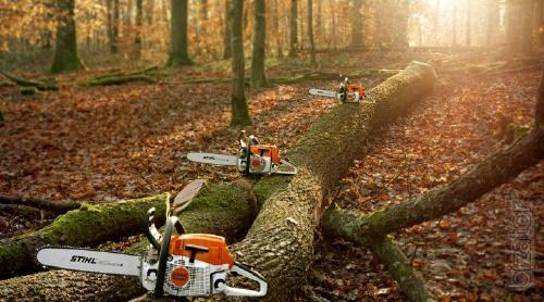Спил деревьев, спилить, спиливание, валка, снос зданий, срезание деревьев,киев, буча, белая церковь
