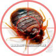 Хотите избавиться от тараканов в квартире или офисе? Звоните: 8 (926) 904-76-54