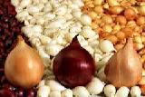 Onion Wholesale