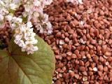 Buckwheat wholesale GOST 5550-74 from the manufacturer.
