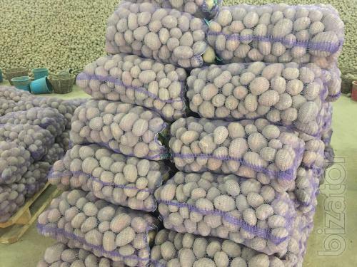 Картофель - поставки из Украины
