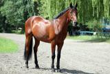 Продажа лошади