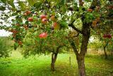 Весенняя хим обработка сада от болезней и вредителей.
