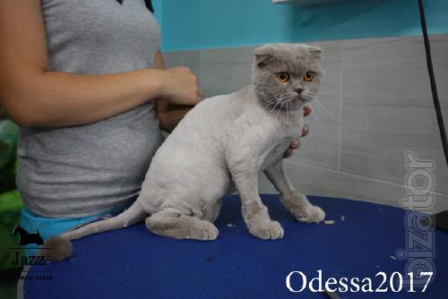 Стрижка кошек без наркоза. Грумер Ирина Подгорная.
