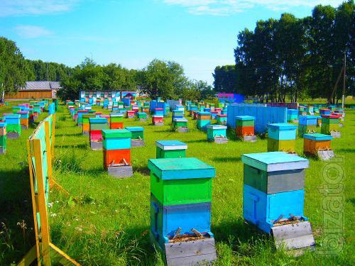Предприятие покупает мед, прополис, воск в Николаевской области.