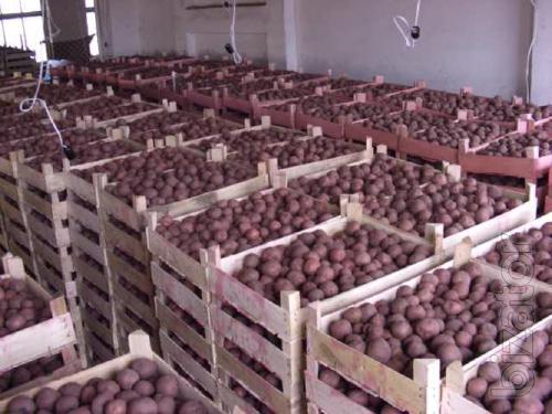 """Оптовая продажа картофеля от ТОВ Компании """"УкрТор"""""""
