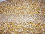 Кукуруза, закупаем Краснодарский край