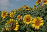 Українське сонечко,Заграва,Сонячний настрій,Український F1