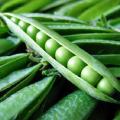 Насіння гороху овочевого