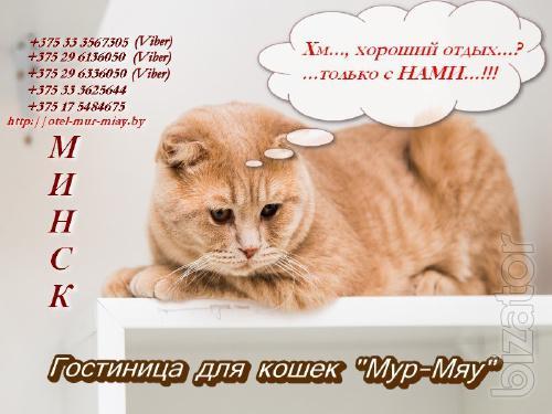 Предоставление услуг по содержанию и уходу за животными (кошки).