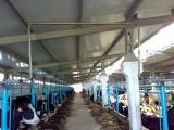 Доильный зал, молокопровод, вакуумопровод, продажа, установка, обслуживание