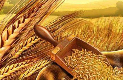 ТОО реализует пшеницу 3,4,5 класса