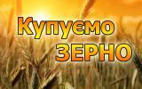 Закуповуємо кукурудзу Хороші ціни