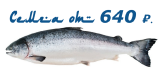 Семга по акции от компании «Морские легенды»
