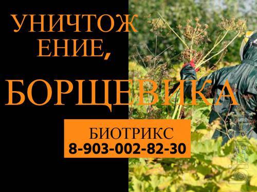 Уничтожение,обработка Борщевика в Серпухове