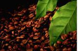 Экстракт черного кофе