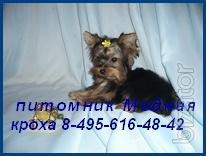 You will find on dogblog.ru