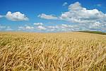 will sell seeds of winter barley,wheat,rape