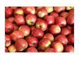 Яблоки Айдаред 65+