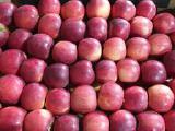 Яблоки Флорина 60+