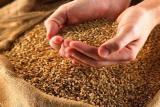 Семена яровых. Ячмень, соя, гибриды Подсолнечника и кукурузы