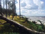 Участок 7,5 гектар 1 береговая линия