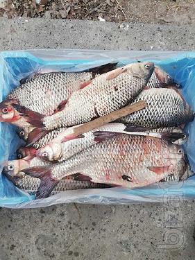 Продажа рыбы оптом Украина.