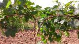 Опоры, колышки для растений Polyarm