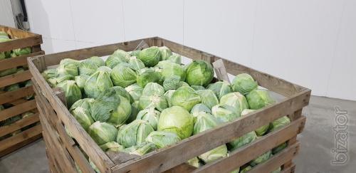 Оптовая продажа овощей: морковь, капуста, лук, свекла