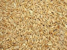 Rice, Corn, Wheat Flour, Wheat, Beans, Milk Powder