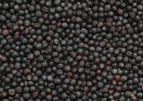 Горчица черная (Mustard black)