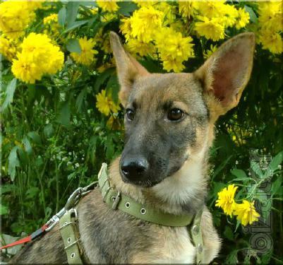 Malinka, dog-soul. She was born in April, Umida incredible. The gift!