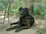 Irma - striped dog! Who tigrou? The gift!