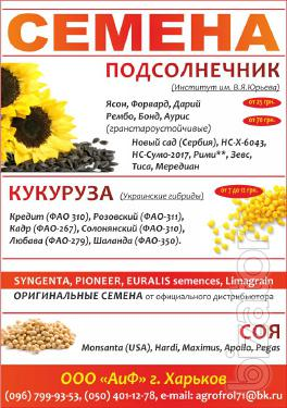Seed Syngenta