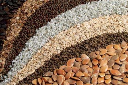 Seeds poseamation peas ,mustard,flax,spring barley,millet.