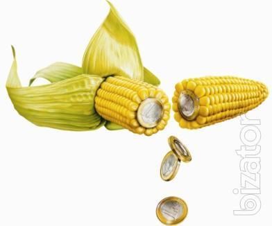 Corn seeds Monsanto,pioneer,Syngenta,Polimetall,hybrids F-1,corn(original).Cheap!