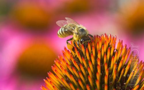 movies on beekeeping