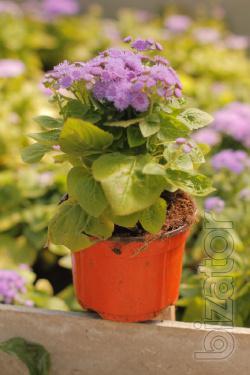 Flowers, gardening, landscape design, garden design, summer perennials,