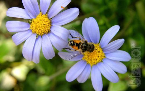 secrets of the beekeeper Krivchikov