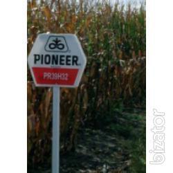 """Seeds of maize hybrids """"Pioneer"""" PR39H32,PR39A50,PR39G12 (FAO 200)"""