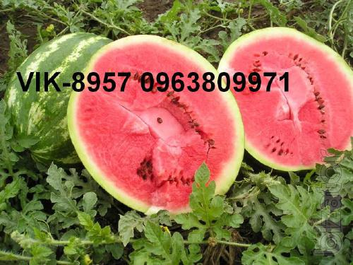 pumpkin seeds.the watermelon.melons; equipment for drying