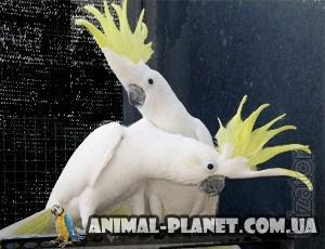Macaws, Cockatoos and Jacko from the Ukrainian kennel