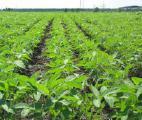 Microfertilizers AgriTecno Fertilizantes (Spain)