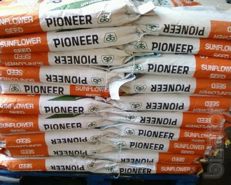 Sunflower seeds pioneer (Pioneer).